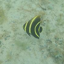 Fish of Bay Islands, Honduras