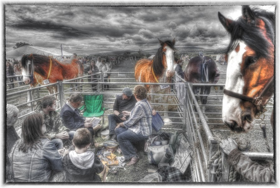 WHO'S WATCHING WHO by CLINT HUDSON - Digital Art People ( horse, fair )