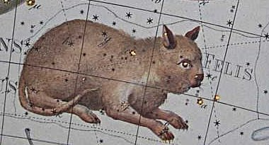 Photo: Stjärnbilden Katten (Felis) Johann Bodes Uranographia år 1801. Public domain enligt Wikimedia Commons.