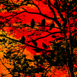 bird's silhouette  by Edward Gold - Digital Art Things ( red, balck, bushes, silhouette, tress,  )