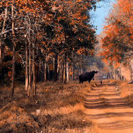 Forest of Tadoba by Pravine Chester - Landscapes Forests ( photograph, nature, trees, forest, landscapes, landscape )