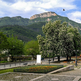 City of Teteven, Bulgaria by Hristo Hristov - Instagram & Mobile Android ( teteven, city, bulgaria, bird, centre, flower )
