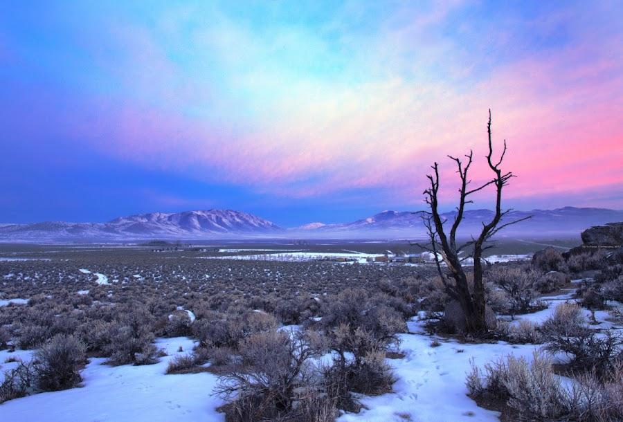 Nevada Winter Pre Sunrise by SB Sullivan - Landscapes Sunsets & Sunrises ( canon, warm, sadness, colorful, yellow, landscape, sun, geology, eos, sky, reno, nature, cold, sunny, happy, weather, skyscape, clouds, orange, desert, mood, white, atmosphere, 5dmii, sunlight, wilderness, dawn, northern nevada, season, nevada, sunset, peace, moody, sunrise, tranquility, high desert, atmospheric )