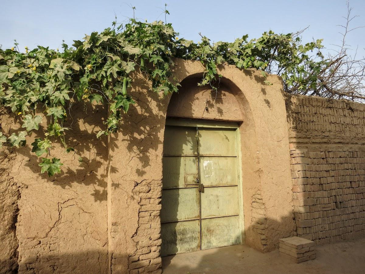 China. Xinjiang Turpan . Grapes Over Front Door Entrance