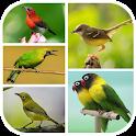 Top 1000 Kicau Burung Mp3 icon