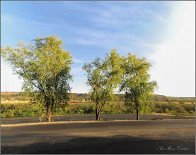 Photo: Salcie (Salix)  - din Turda, dig, Str. Constructorilor - 2019.09.15