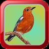 Masteran Burung Anis Merah APK
