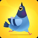 Pigeon Pop 1.1.6