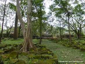 Photo: Bauphuon, through the trees.