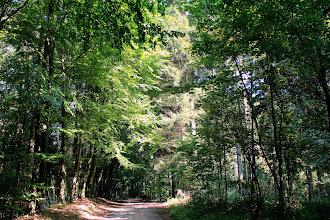 Photo: Waldweg in Höhe des Wasserwerks Großensee