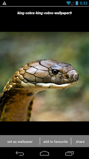 King Cobra Snake Wallpapers HD screenshot 4