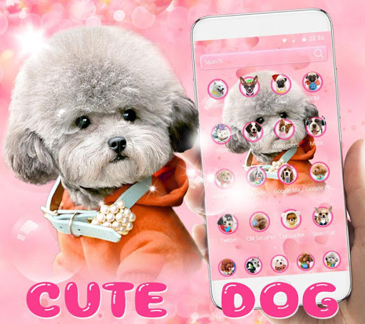 Download Cute Dog Theme Pet Dog Wallpaper Free For Android Cute Dog Theme Pet Dog Wallpaper Apk Download Steprimo Com