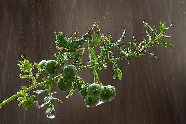 Sotto la pioggia di manrico