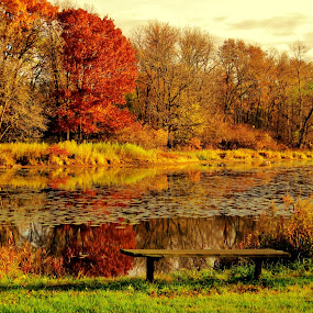 Fall early morning by Diane Ebert - Landscapes Sunsets & Sunrises ( #thecandidshutterbug, #colors, #lovephotography, #photography, #fall,  )