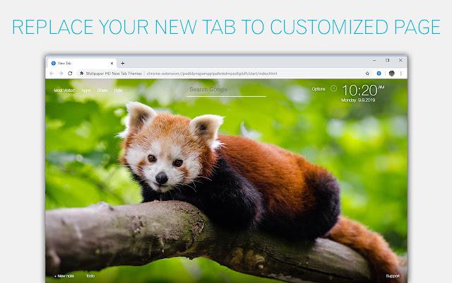 Red Panda Backgrounds New Tab - freeaddon.com