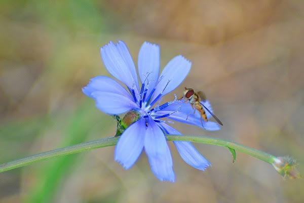 L'ape e il fiore di Pablophoto