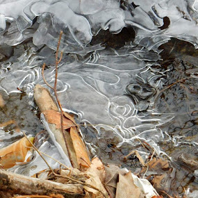 by Moe Cusick - Nature Up Close Water (  )