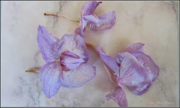 Photo: Orhidee (Orchidaceae), din balconul meu - s-a lepadat de petale - 2017.07.12