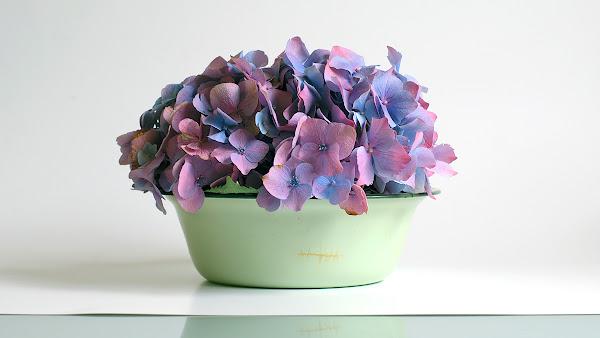<p> Hydrangeas in Green Bowl</p>