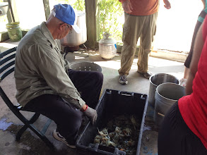 Photo: Capt. Charles preparing the crabs