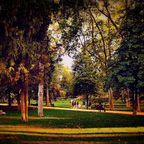Autumn by Orkidea W. - City,  Street & Park  City Parks ( retiro, park, nature, autumn, orkidea, d3100, trees, nikon, photography )