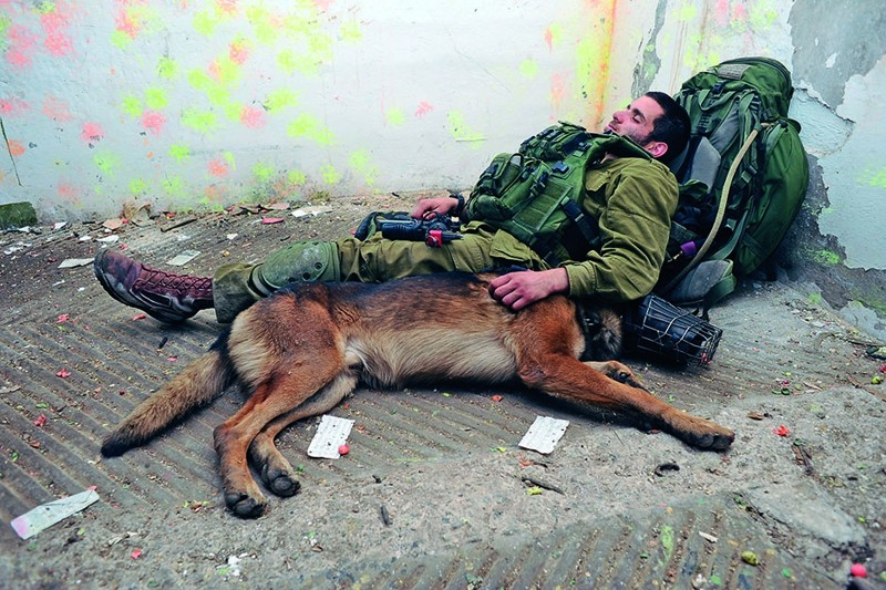 Собак надо носить израиль, носить, собака