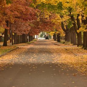 Fall Street by Terry Oviatt - City,  Street & Park  Street Scenes