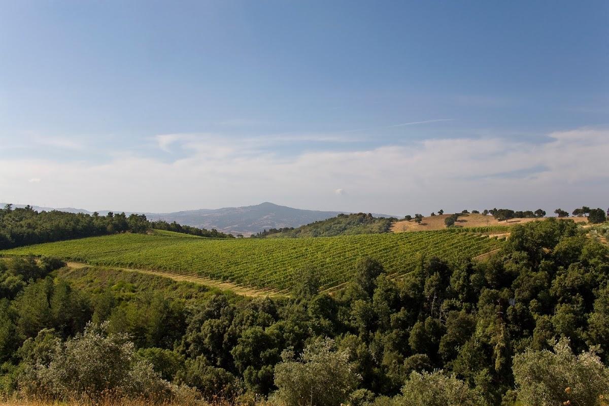 Strada del vino Montecucco, vigneti, Poggio del Sasso, Cinigiano