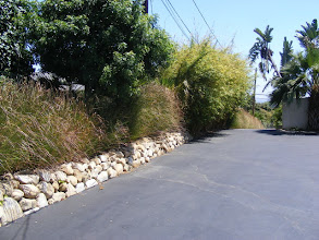 Photo: Vetiver and Bamboo: Alphonse Karr' share screening and erosion control duties in Ventura, Ca.