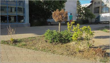Photo: Calea Victoriei, Mr.2 - Spatiu verde - 2018.05.12