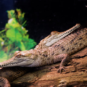 by Carolyn Lawson - Animals Reptiles
