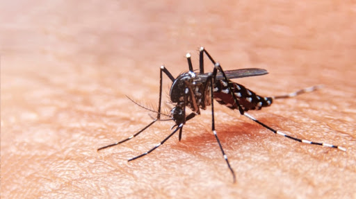 Positive Phase III Results for First-Ever Single-Dose Chikungunya Vaccine