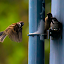 by Lee Miko - Animals Birds