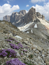 Photo: Even flowers at 9,000 feet.