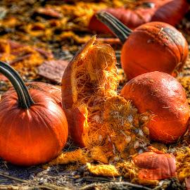 Halloween Aftermath by Elk Baiter - Public Holidays Halloween ( pumpkin, mess, halloween )