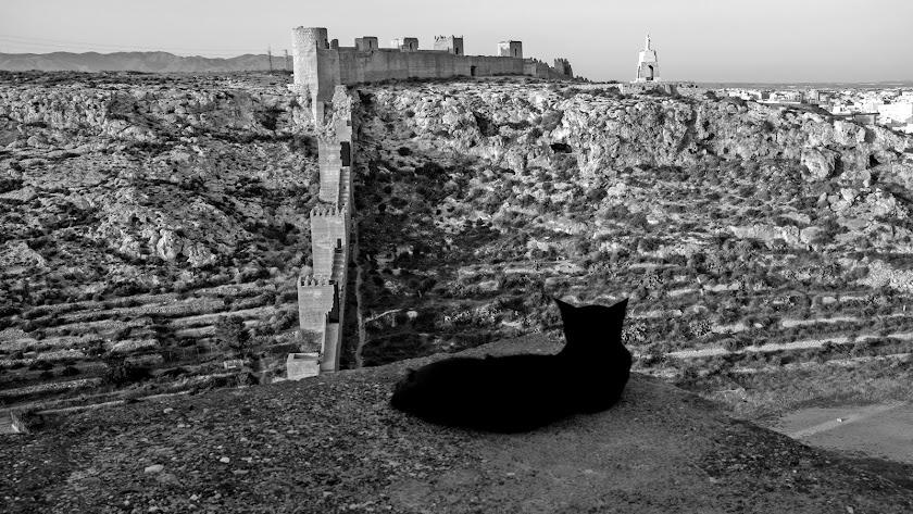 Un gato negro observa plácidamente la Alcazaba.