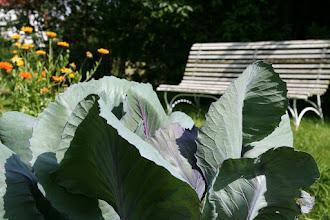 Photo: Ruhesitz zwischen Gemüse und bunten Blumen