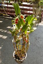 Photo: Marché aux orchidées près de la fausse imitation d'une copie de marché flottant à l'ancienne.