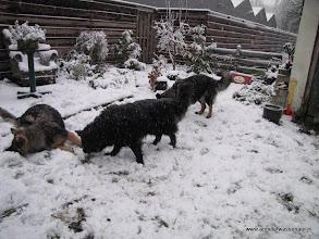 Photo: Duiken in de sneeuw.....