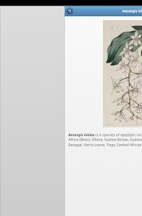 Perennial herbs Ekran Görüntüsü