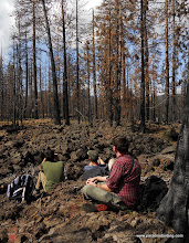 Photo: Our study team patiently awaits the exodus of a female Black-backed Woodpecker from her nest cavity. Sugarloaf burn, Lassen Nat'l Forest.