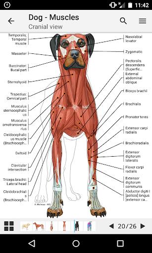 vet-Anatomy 1.18.0 screenshots 1