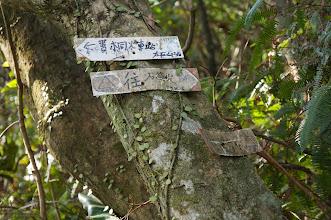 Photo: 登頂叉路口,另一條山路是我們預定要下山的路線