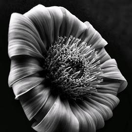 by Mario Pavlić - Black & White Flowers & Plants