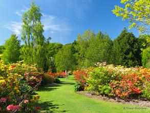 Photo: Azalea Garden, Hazlehead Park, Aberdeen