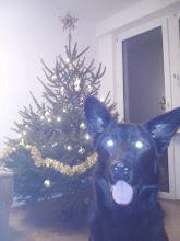 Photo: Aron w świątecznej aurze :)