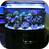 Aquarium Decorating Ideas