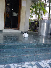 Photo: Neco-chan, a peaceful calico cat sitting in a small Saibaba temple. 8th January updated -http://jp.asksiddhi.in/daily_detail.php?id=417