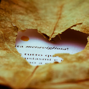 Life Is Wonderful by Cristina Casati - Nature Up Close Leaves & Grasses ( love, milan, sentiment, book, pwcfalleaves, italy )