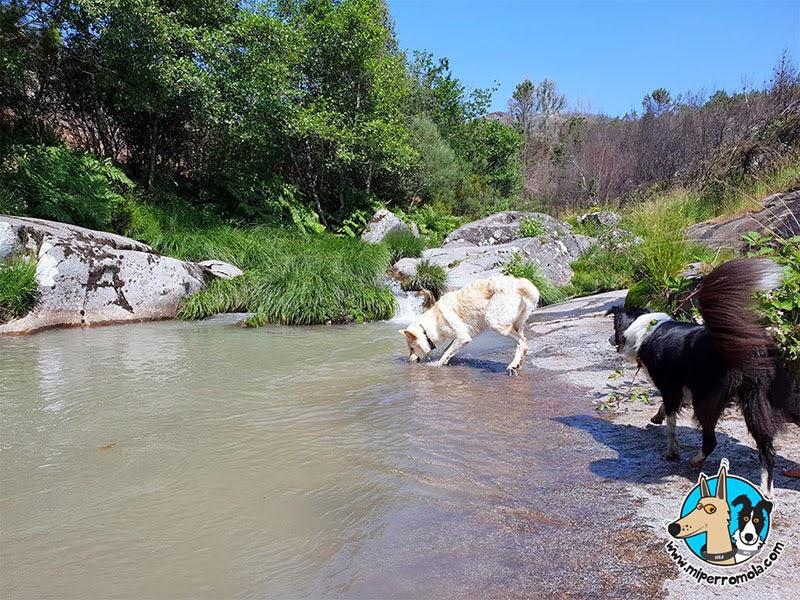 Perros bienvenidos en las Pozas de Melón